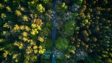Free Highway In The Middle Of The Forrest Royalty Free Stock Photo - 108798435