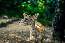 Free Selective Focus Photography Brown Doe Royalty Free Stock Images - 108798519