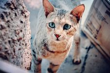 Free Selective Focus Photography Of Brown Tabby Cat Stock Photography - 108798532