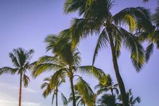 Free Low Angle Photography Of Coconut Trees Stock Photos - 108799033