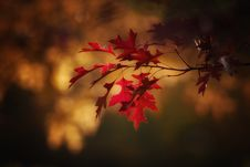 Free Red, Leaf, Nature, Maple Leaf Royalty Free Stock Photos - 108956978