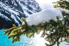 Free Snow, Winter, Tree, Pine Family Stock Photography - 108957342