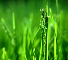 Free Grass, Water, Grass Family, Field Stock Image - 108957431