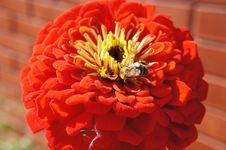 Free Flower, Orange, Petal, Gerbera Royalty Free Stock Images - 108957449