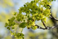 Free Plant, Flora, Branch, Tree Stock Images - 108957524