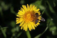 Free Flower, Honey Bee, Yellow, Bee Royalty Free Stock Photos - 108957528
