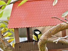 Free Fauna, Bird, Beak, Bird Food Stock Images - 108957544