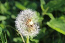 Free Flower, Flora, Dandelion, Plant Stock Photos - 108957553