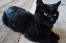 Free Cat, Black Cat, Black, Mammal Royalty Free Stock Image - 108957786