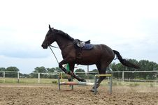 Free Horse, Bridle, Rein, Horse Tack Stock Photography - 108957832