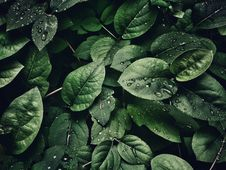 Free Close-Up Photography Of Leaves With Droplets Royalty Free Stock Images - 108995599