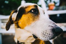 Free Tricolor Short-coated Dog In Close Up Photography Stock Photos - 108995603