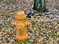 Free Hydrant And Leaves Stock Photo - 1090460