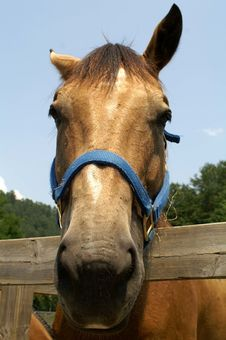 Free Horse Face Stock Photo - 1090370