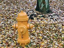 Hydrant And Leaves Stock Photo