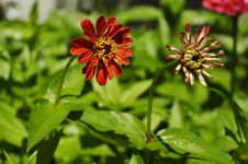 Free Flower Royalty Free Stock Photography - 1091007