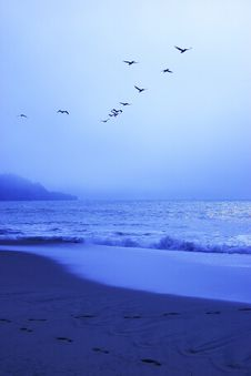 Free Blue Beach Pelicans Stock Photography - 1091102