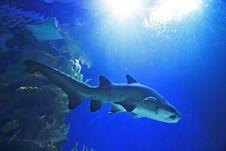 Free Shark Stock Photo - 1092680