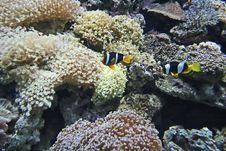 Nemo Fish Royalty Free Stock Photos