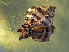 Seashell Reflections On Metal Plate Royalty Free Stock Photos