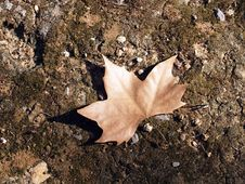 Free Leaf On The Ground Royalty Free Stock Images - 1092859