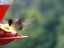 Free Hummingbird At Feeder Royalty Free Stock Image - 1094466