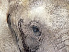Free The Eye Of The Elephant Stock Photo - 1096380