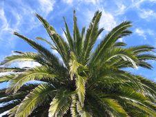 Free Palm2 Stock Image - 1096481