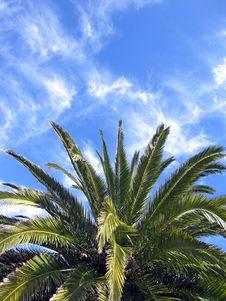 Free Palm1 Royalty Free Stock Photo - 1096495