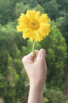 Free Hand Holding Daisy Stock Image - 1096731