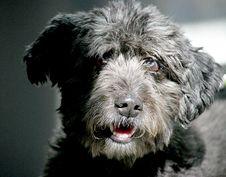 Free Nice Dog 6 Royalty Free Stock Photo - 1097835