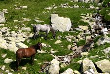 Free Horse Group Royalty Free Stock Image - 1097946