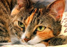 Free Our Cat Royalty Free Stock Images - 1098469
