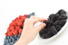 Free Picking Blackberries Royalty Free Stock Image - 1098616