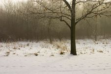 Free Winter Tree Stock Photos - 1098663