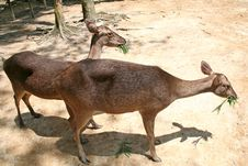 Free Deer Feeding Royalty Free Stock Image - 1099616