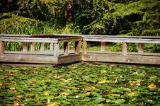 Free Dock On Lilypad Pond Royalty Free Stock Photo - 10908105