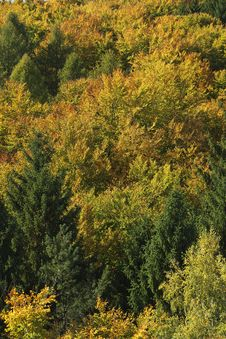 Free Vegetation, Temperate Broadleaf And Mixed Forest, Ecosystem, Leaf Royalty Free Stock Photos - 109021428