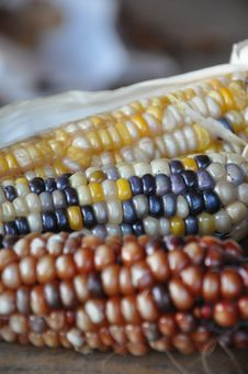 Free Corn On The Cob, Commodity, Bead, Maize Stock Photography - 109021642
