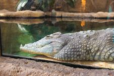 Free Crocodilia, Crocodile, Reptile, American Alligator Stock Photo - 109021880