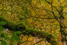 Free Nature, Vegetation, Temperate Broadleaf And Mixed Forest, Ecosystem Royalty Free Stock Photos - 109022038
