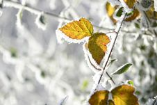 Free Leaf, Branch, Winter, Frost Stock Images - 109022214