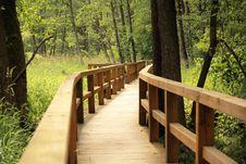 Free Path, Nature Reserve, Ecosystem, Tree Royalty Free Stock Photos - 109022288