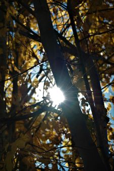 Free Branch, Tree, Light, Leaf Royalty Free Stock Images - 109022349