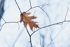 Free Leaf, Branch, Tree, Twig Stock Photography - 109022402