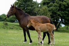 Free Horse, Mare, Pasture, Horse Like Mammal Stock Images - 109022424