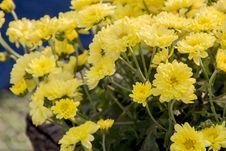 Free Flower, Yellow, Plant, Flowering Plant Stock Image - 109022431