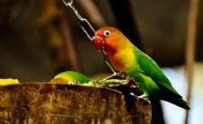 Free Bird, Parrot, Beak, Parakeet Stock Photo - 109022450
