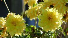 Free Flower, Yellow, Flowering Plant, Plant Stock Image - 109022491
