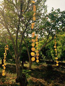 Free Tree, Plant, Branch, Autumn Royalty Free Stock Photos - 109022588